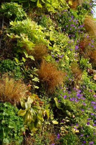 Grasses and ferns on a living wall - Weatherstaff planting ideas