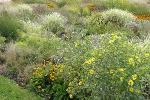 Drifts of planting - Weatherstaff blog