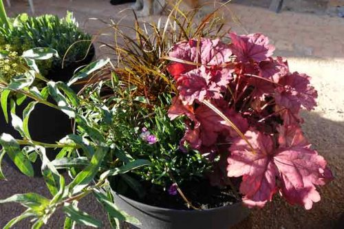 Pot 2 in April - from the Weatherstaff PlantingPlanner blog