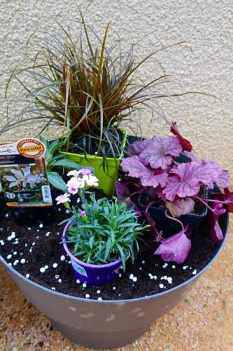 Pot 2 - heuchera, uncinia rubra, gaura and dianthus - container planting ideas from Weatherstaff