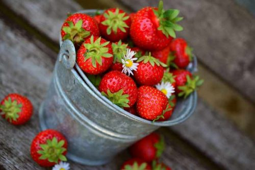 Grow strawberries on your living wall - planting ideas from Weatherstaff garden design software