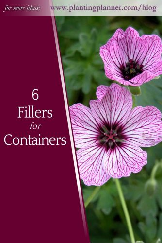 5 Fillers for Containers - from Weatherstaff garden design software
