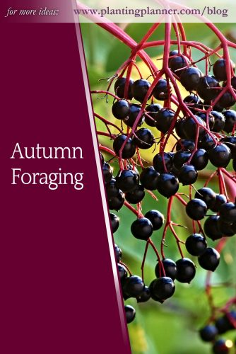 Autumn Foraging - from Weatherstaff garden design software