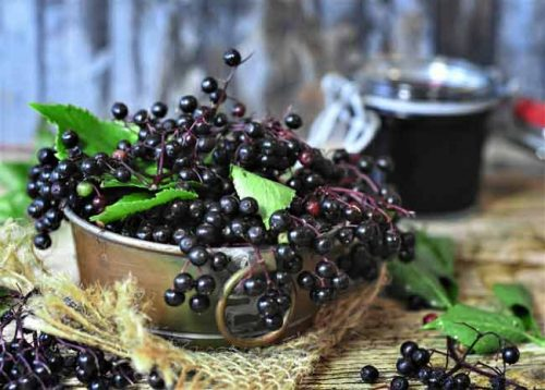 Elderberries in a bowl with a glass of liqueur