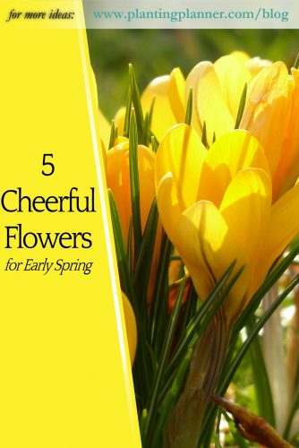 5 Cheerful Flowers for Spring - from Weatherstaff garden design software