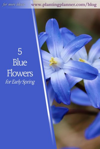 5 Blue Flowers for Early Spring - from Weatherstaff garden design software
