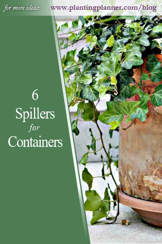 6 Spiller Plants for Containers - from Weatherstaff garden design software
