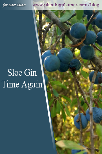 Sloe Gin Time Again - from Weatherstaff garden design software