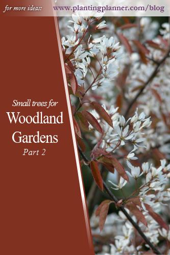 Woodland Gardens Part 2 - from Weatherstaff garden design software