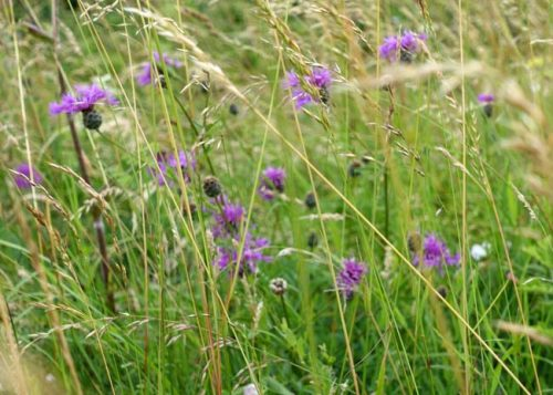 Small wildflowers and grasses