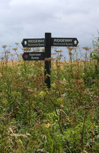 Wooden signpost with wildflowers
