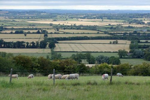 A countryside view with sheep in the foreground