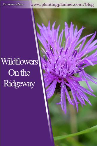 Wildflowers on the Ridgeway - from Weatherstaff garden design software