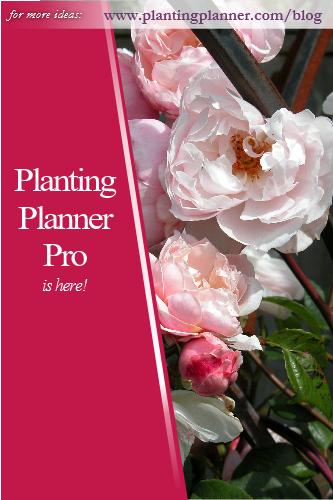 PP Pro is here - from Weatherstaff garden design software