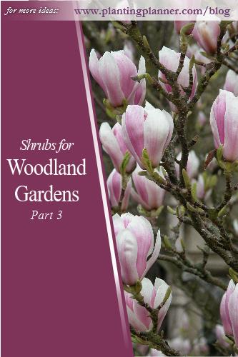Shrubs - Woodland Gardens Part 3 - from Weatherstaff garden design software