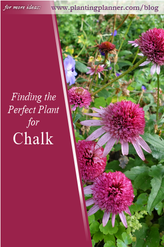 Finding the Perfect Plant for Chalk - - from Weatherstaff garden design software