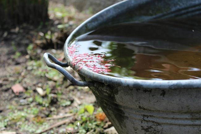 Rainwater in metal bucket